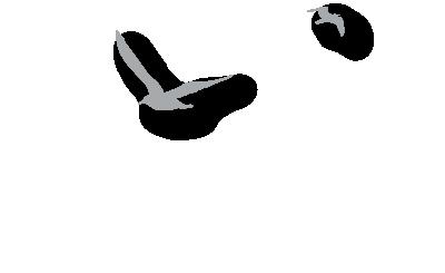 seagulls-01-01